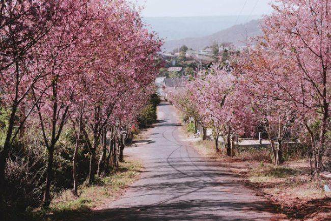 10 mùa hoa chụp ảnh cưới đẹp nhất tại Đà Lạt